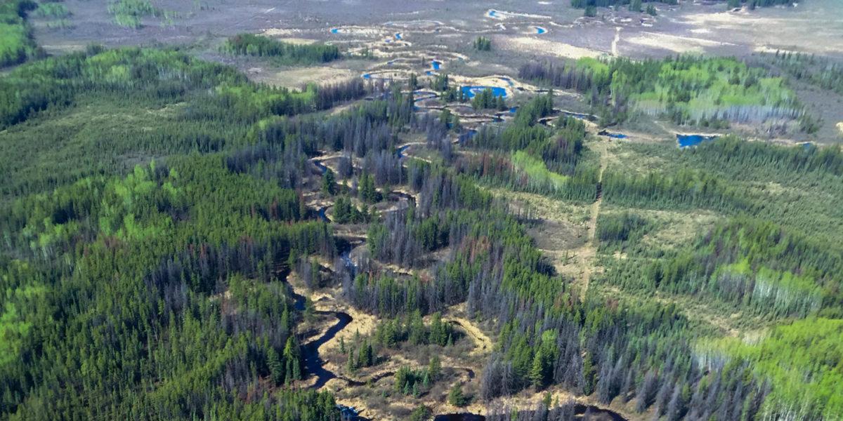 boreal wetlands aerial view