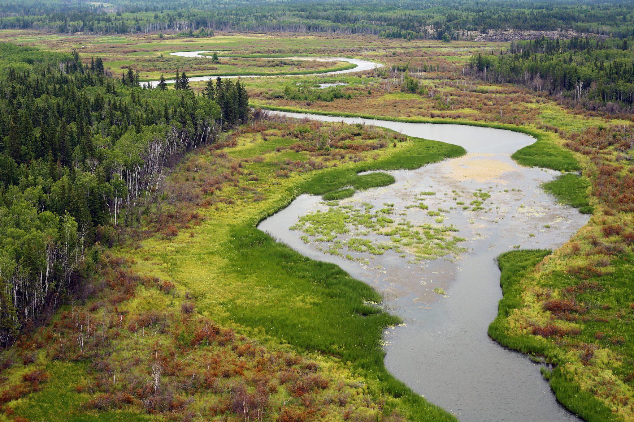 nwt wetlands