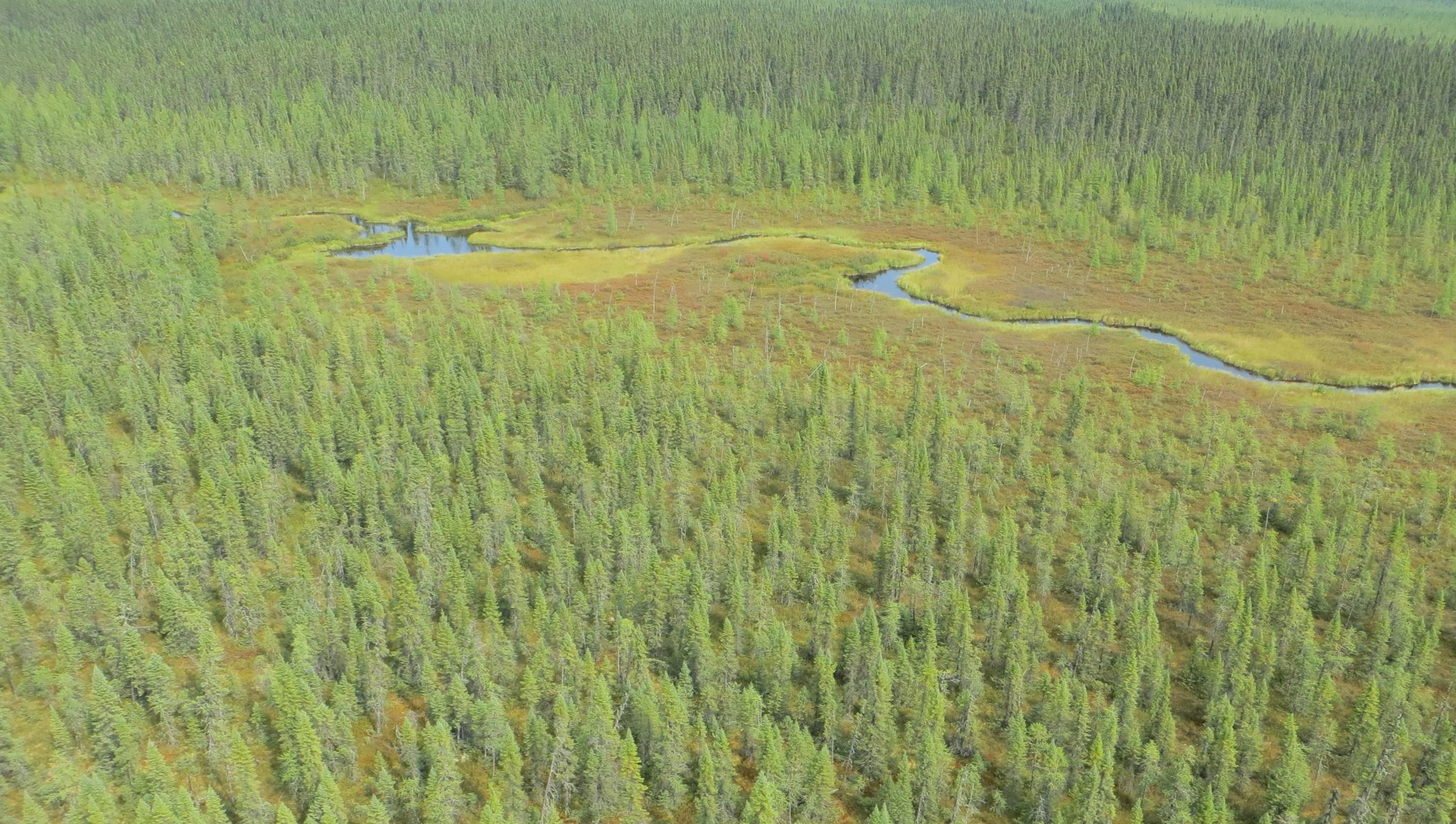 boreal wetlands ontario