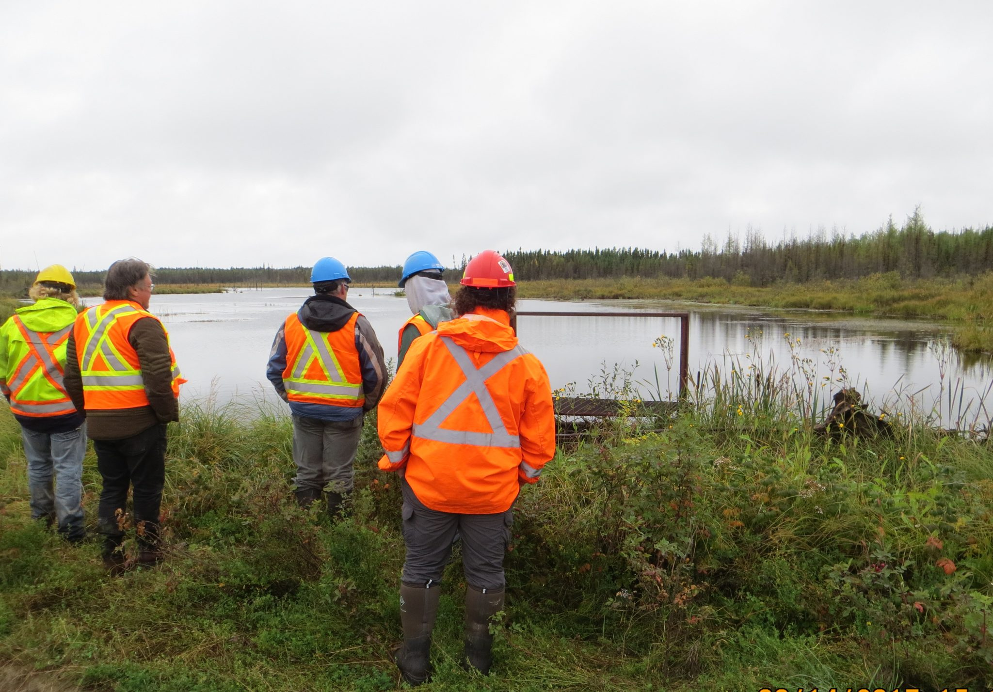 forestry wetland mapping