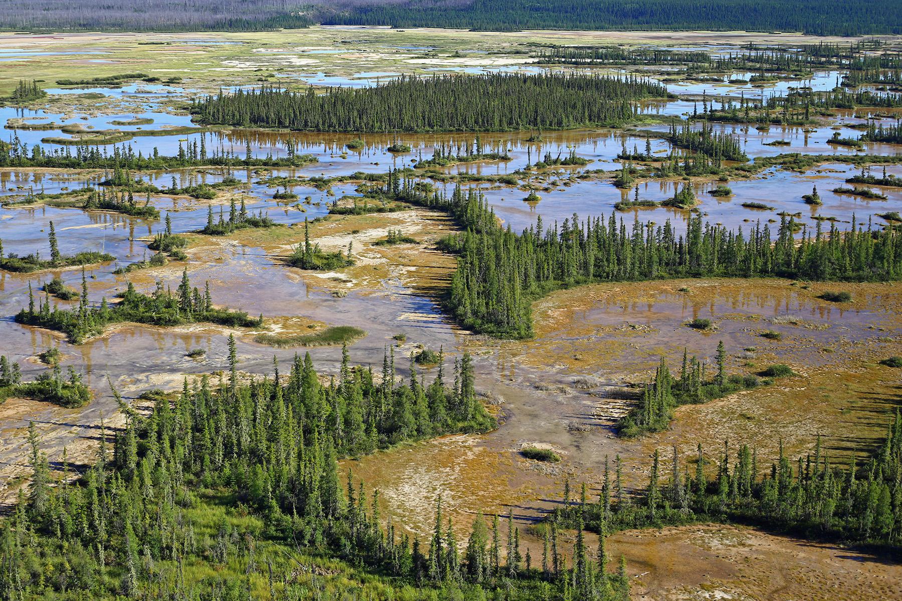 boreal-wetlands-canada