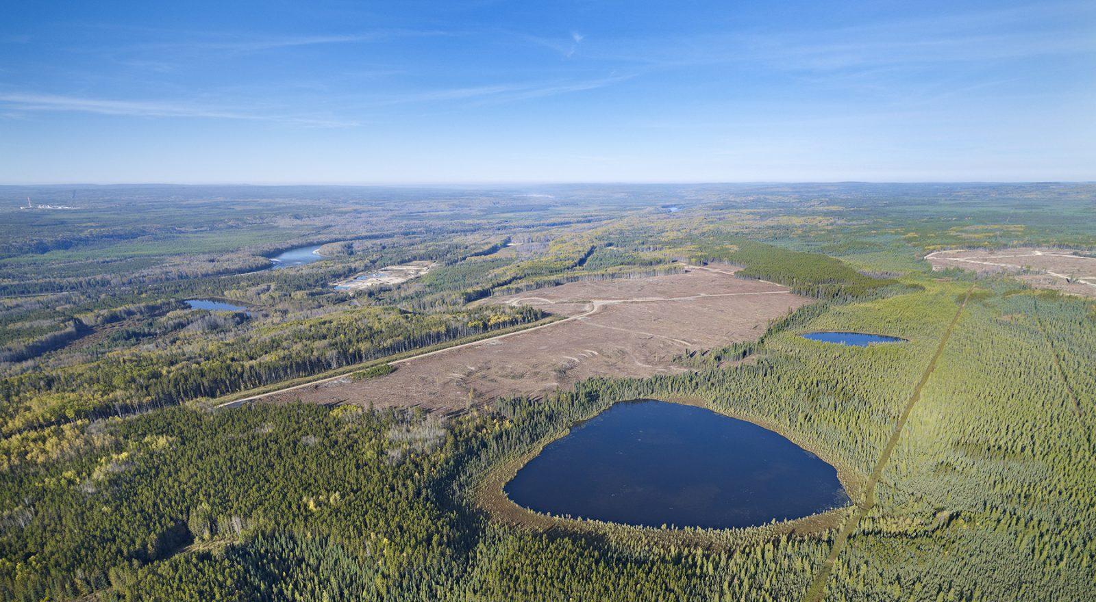 forestry-wetlands-alberta-canada