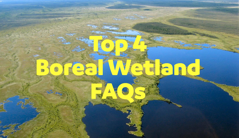 boreal wetland faqs